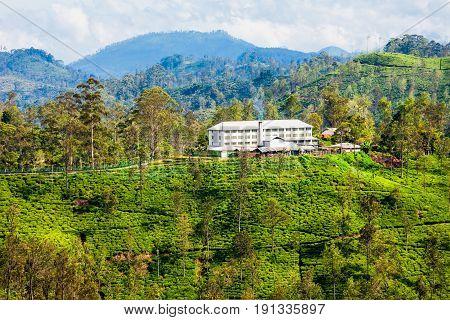 Tea Factory, Sri Lanka.