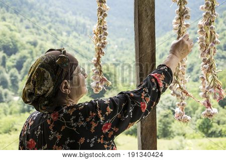 Elderly woman picking dried queue garlic in balcony backside view villagers preserving garlic for longer time.