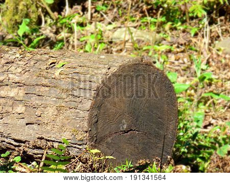 Piece of trunk lying at the soil. Trunk cut off. Wood. Lumber. Rural life