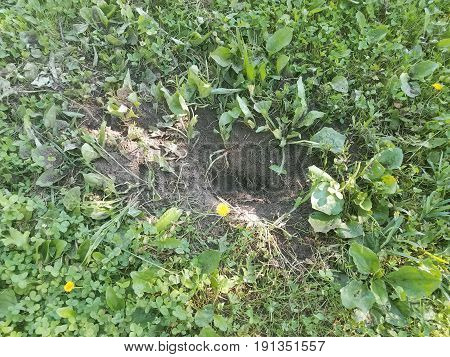 large hole dug in green grass by an animal