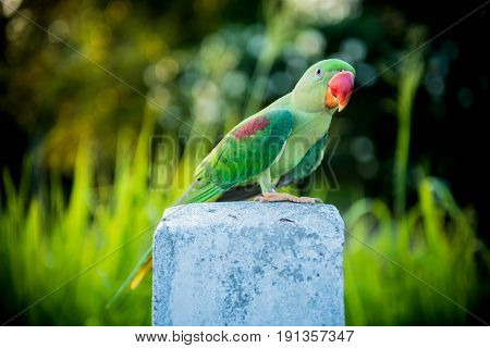 Parrot lovely bird freedom animal and pet