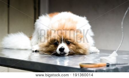 Veterinarian Sterilization  On Dog By Saline Solution For The Treatment Of Sick Dog; Veterinarian St