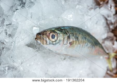Fresh Raw Fish On Ice On A Wooden Table.