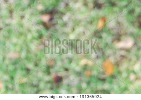 Grass field, lawn abstract background, bokeh background