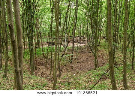 Deciduous Forest Landscape