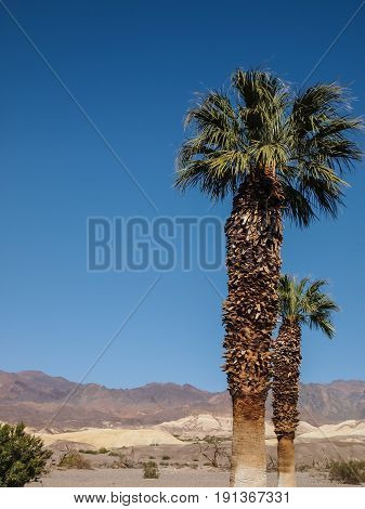 Mountains, Palm Tree And Desert Landscape
