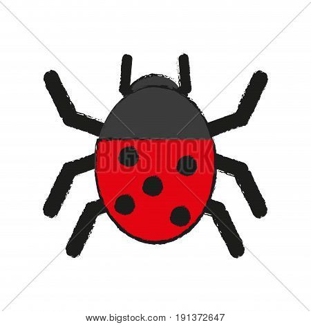Wonderful ladybug insect illustration icon vector design graphic draw