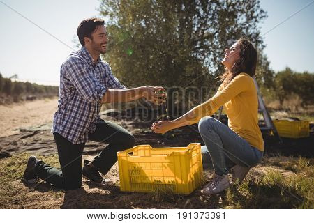 Playful young couple holding olives while kneeling at farm