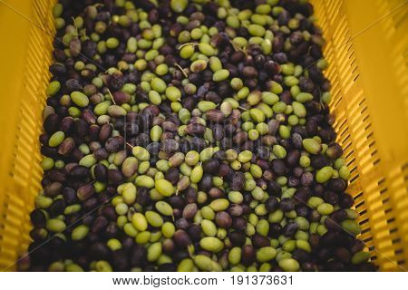 High angle view of green and black olives in crate at farm
