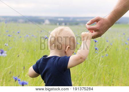 Follow Me. Little Boy Walking In The Field Of Knapweeds. Concept.