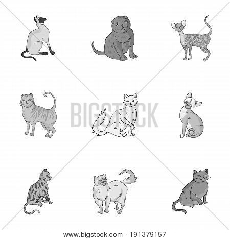 Collection of cats in one picture. Different cats in one picture. Cat breeds icon in set collection on monochrome style vector symbol stock web illustration.