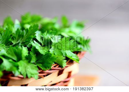 Fresh parsley in a wicker basket. Green parsley herbs background. Closeup