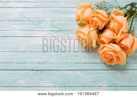 Peach color roses flowers on turquoise wooden background. Shabby chic. Place for text. Selective focus.