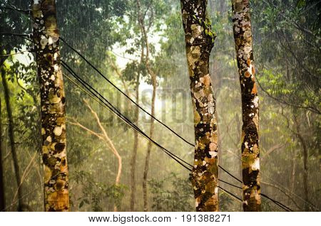 monsoon rainfall in tropical rainforest with electronic cables