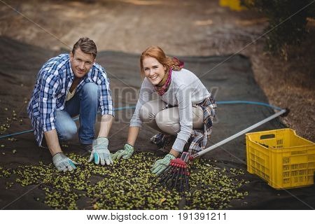 Portrait of happy couple working at olive farm