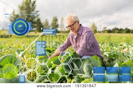 organic farming, agriculture and people concept - happy senior man growing white cabbage at farm