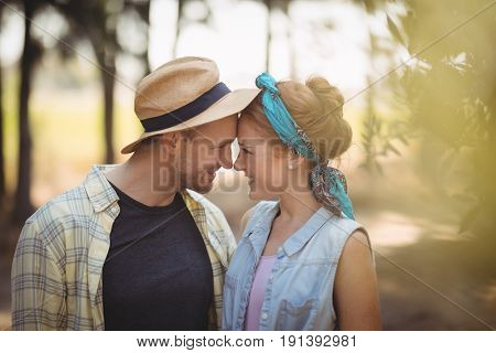 Cheerful young couple rubbing noses at olive farm