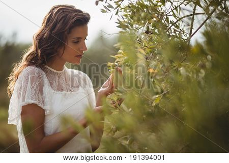 Close up of beautiful young woman holding olive tree at farm