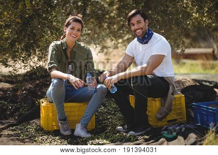 Portrait of smiling young couple sitting on crates at olive farm