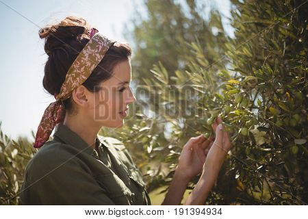 Close up of woman holding olive tree at farm on sunny day