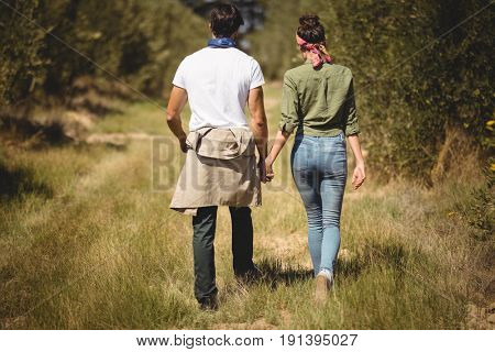 Rear view of couple holding hands while walking at olive farm