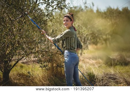 Portrait of smiling young woman using olive rake at farm