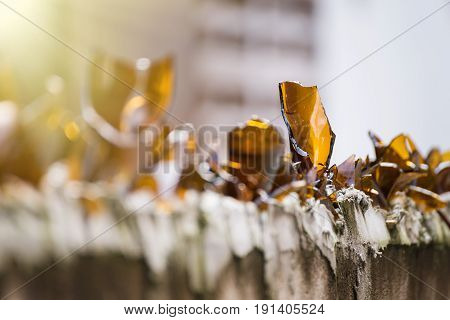 Broken Bottles On The Top Of A Wall For Anti Thief.