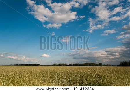 Spikes On The Background Of Blue Sky,
