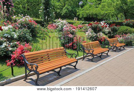 Park bench and beautiful flower garden park