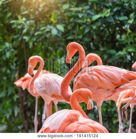 Flamingo birds standing in lake