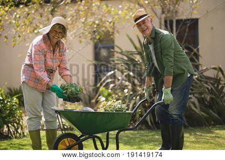 Portrait of cheerful senior couple carrying plants in wheel borrow at yard