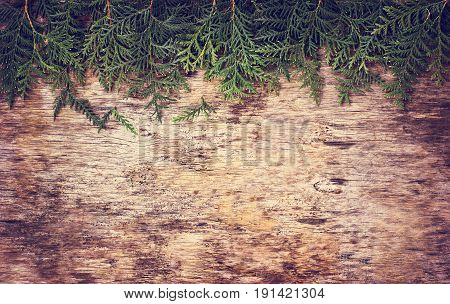Branches arborvitae on wooden background. Christmas background with branches arborvitae.