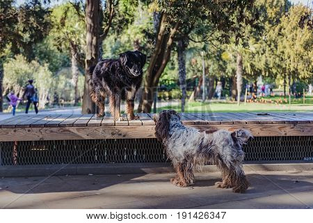 Urban landscape. Two dogs- romantic meeting in the city park. Animal friendship.