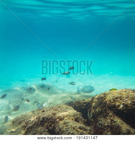 Beautiful underwater sea, ocean landscape background