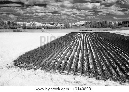 Countryside Fields In Summer. Infrared Image