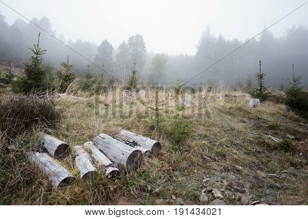 Pieces of wood in front of foggy wood