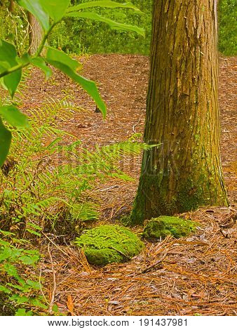 HDR photo image of rocks, tree trunk & ferns vertical