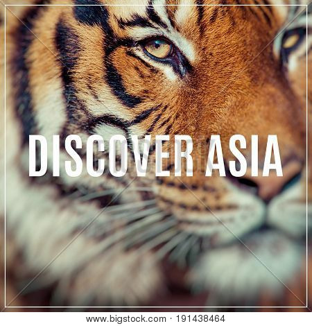 Discover Asia. Close-up of a Tigers face.Selective focus.