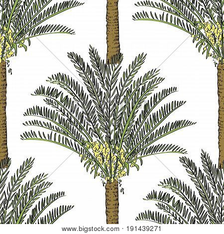 Vector Drawn Cycas Palm Tree Seamless Pattern On White Background In A Sketch Style. Exotic Collecti