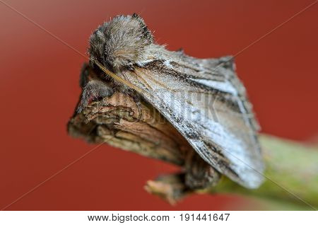 Beautiful butterfly prominent sleeps on a branch on a red background