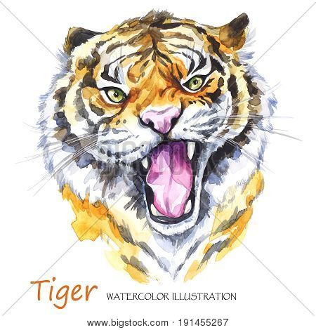 Watercolor roaring tiger on the white background. African animal. Wildlife art illustration. Can be printed on T-shirts, bags, posters, invitations, cards, phone cases, pillows. Place for your text.
