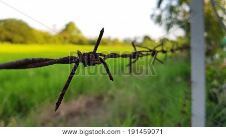 close up of a farmers barbed wire fence,Barbed Wire Fence on Landscape with Blue Sky.