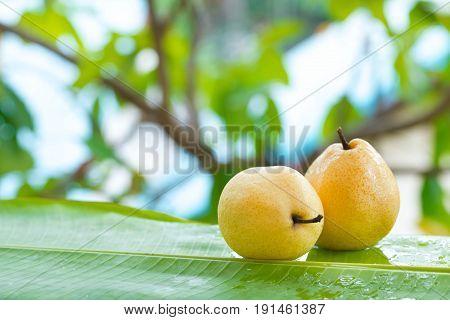 Fresh yellow pear tropic fruit summer refreshment outdoors