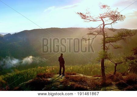 Hiker Stand At Heather Bush On The Corner Of  Empire Bellow Pine Tree And Watch Over Misty And Foggy