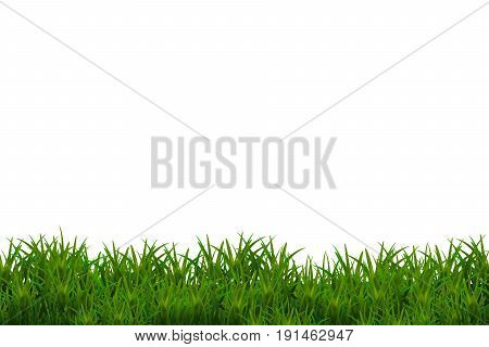 Green glossy grass isolated on white background.