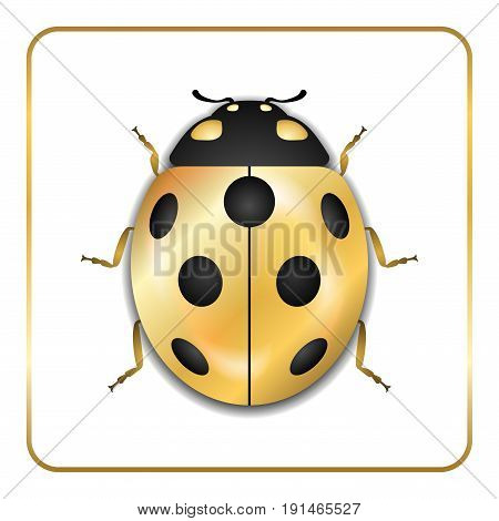 Ladybug gold insect small icon. Golden metal lady bug animal sign isolated on white background. 3d volume bright design. Cute shiny jewelry ladybird. Lady bird closeup beetle. Vector illustration
