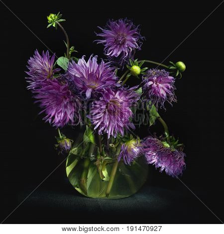 Still life with a bouquet of lush purple asters in a glass jug with clear water lit by rays of light on black background square photo.