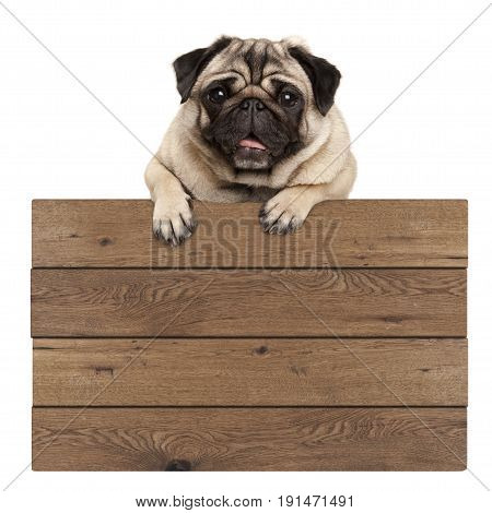 cute smiling pug puppy dog hanging with paws on blank wooden promotional sign isolated on white background