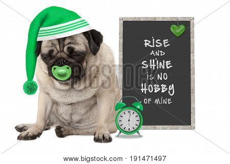 getting up in early morning grumpy pug puppy dog with sleeping cap alarm clock and sign with text rise and shine is no hobby of mine isolated on white background