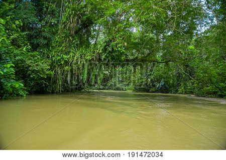 Calm and magical dark Amazon waters, located in the amazon rainforest in Cuyabeno National Park, in Sucumbios province in Ecuador.